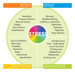 EFFECT OF STRESS ON WHOLE BODY